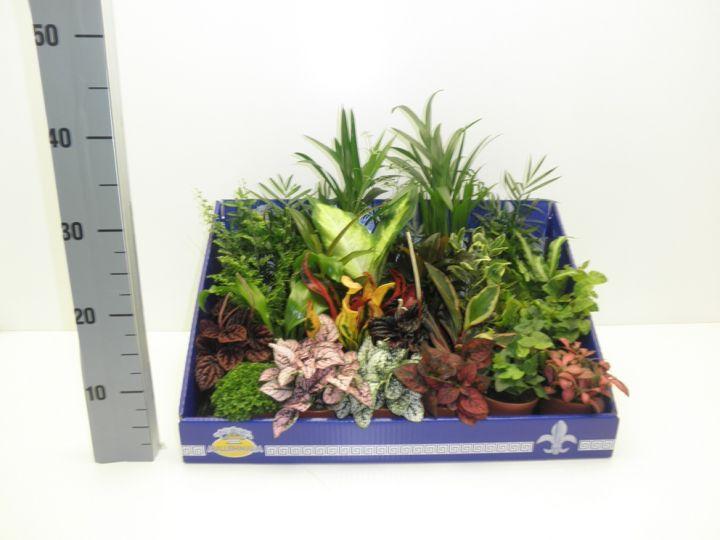 особенностью цветочных плант микс замерз фото устанавливаются потолке хорошо