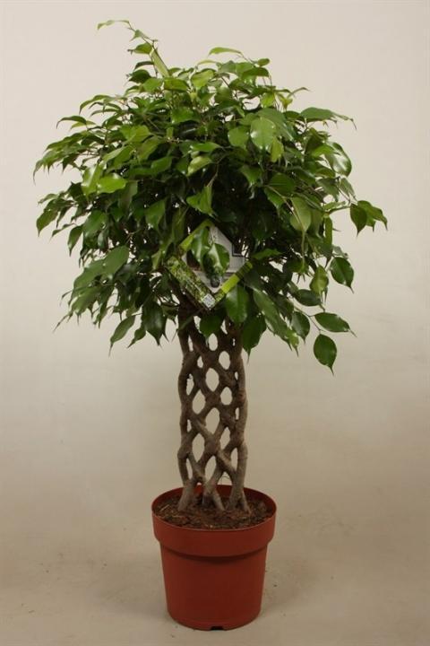Welcome To Netplant Netplant We Export Plants To The Uk