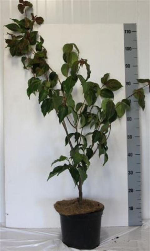 Welcome To Netplant Netplant We Export Plants To The Uk Germany