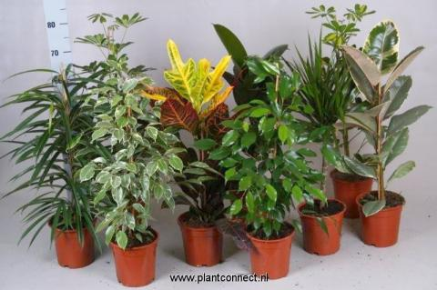 HOUSEPLANT MIX