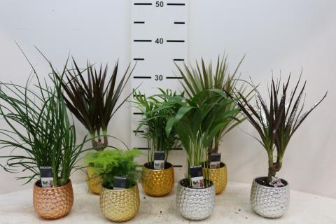 House Mini Mix Deco Pots